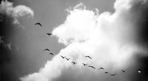 birdsinflightcp